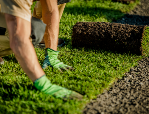 Why You Need Turf in Your Colorado Springs Yard