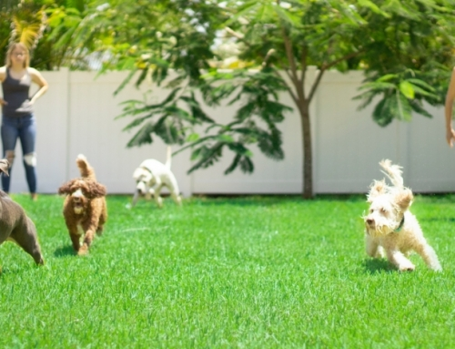 Artificial Turf for Dogs? 5 Commonly Asked Questions
